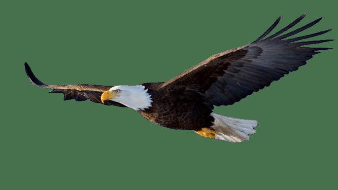 aigle-agence-besançon