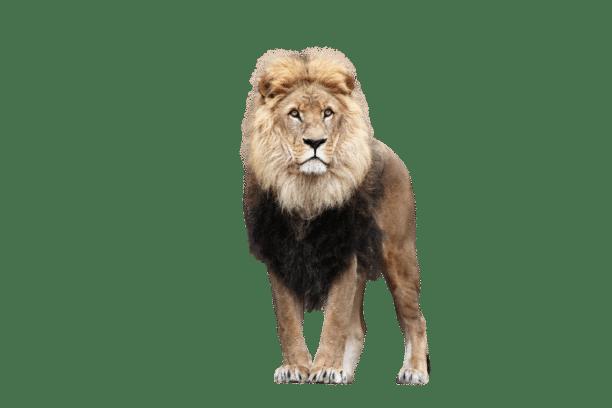 lion-montbéliard-belfort
